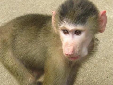 1980属猴命中贵人是什么属相?