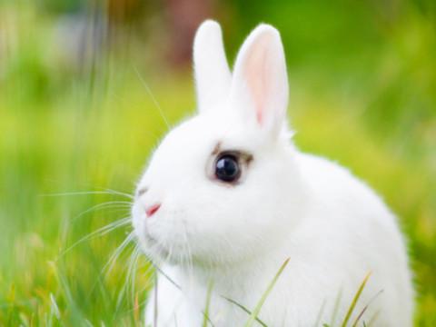 99年属兔的属相婚配表与什么生肖相合?