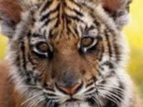74年属虎有离婚现象严重吗感情幸福吗?
