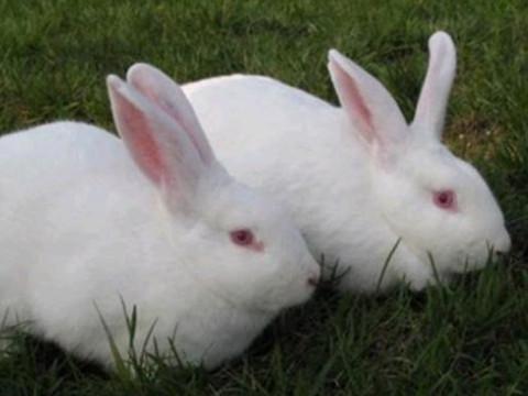 1987年属兔女2022年运势及运程,35岁属兔人2022全年每月运势女性如何