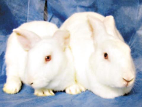 75年属兔的一生财运如何会大富大贵吗?