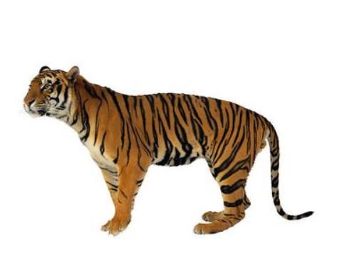 2022年属虎什么颜色最聚财 虎年属虎的招财颜色