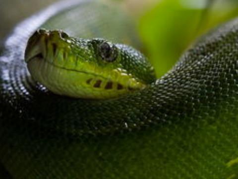 属蛇人狠起来有多狠没人情味吗?