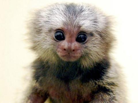属猴女人爱情专一吗性格脾气好不好?