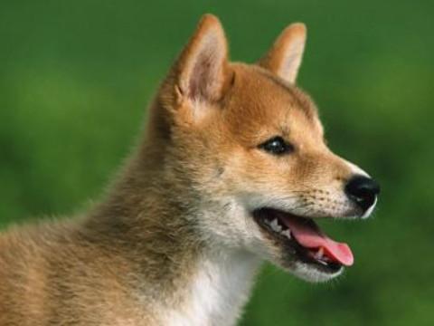 属狗是哪一年的今年多少岁2021顺不顺?