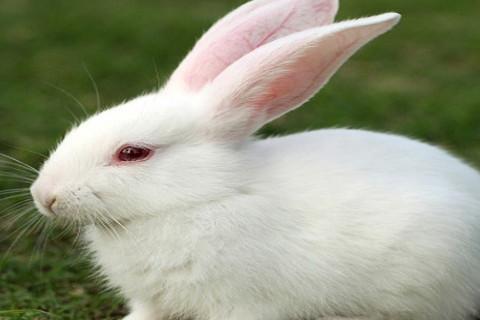 1999年属兔人2021年佩戴什么吉祥物 今年2021年运势详解