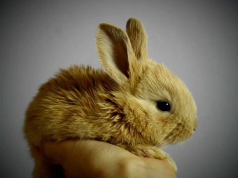 为什么属兔的人离婚多婚姻感情不顺?