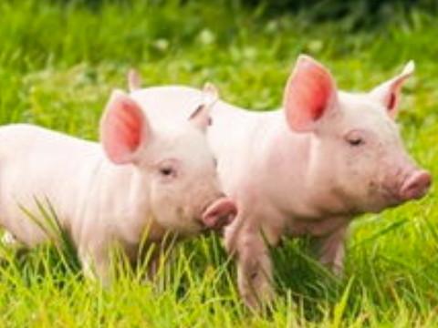 属猪人的第三次大运是什么时候?