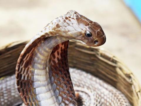 属蛇做啥赚大钱最适合什么行业?