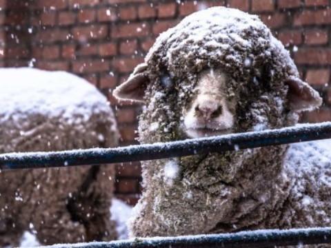 属羊人未来5年的运势如何?