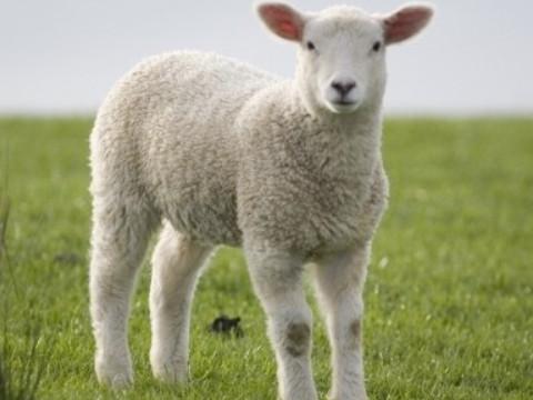 1991年属羊女2022年运势及运程,31岁属羊人2022全年每月运势女性如何