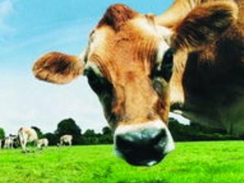 属牛36岁本命年很可怕会有劫难怎么化解?