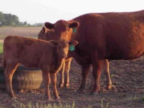 2021年属牛好不好能走大运吗?