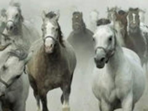 90属马一生有几次劫难命运如何?