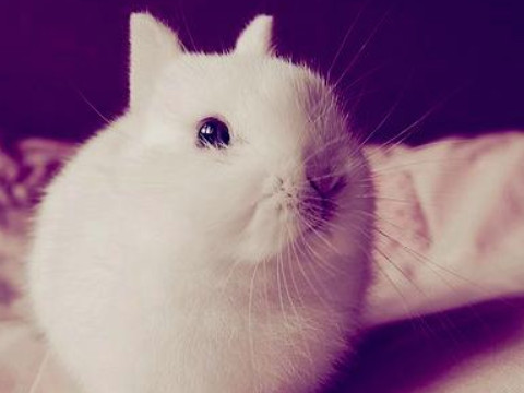 63年兔女有几次婚姻属兔人幸福美满吗?