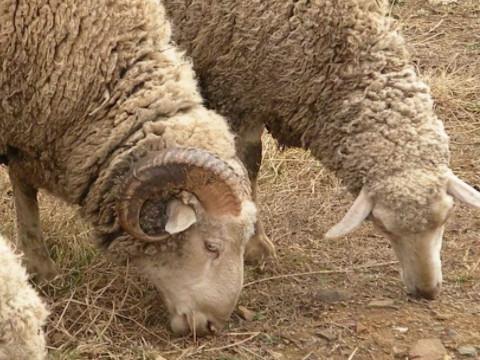 属羊的男孩出生吉日是什么时候?