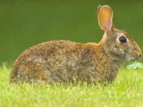 99属兔一生有几次婚姻会幸福吗?