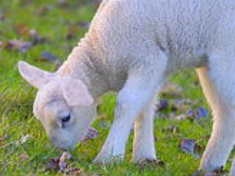 属羊男外遇后离婚能复婚吗?