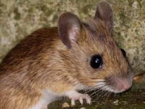 什么时辰出生的鼠宝宝好命好?