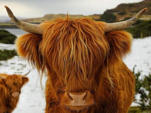 属牛今年运势怎么样好不好?