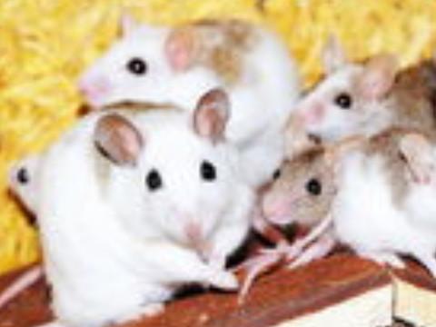 1972年属鼠人的命运如何顺不顺?