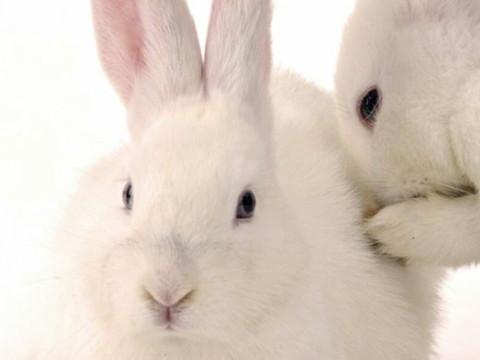 属兔的人本命年佩戴什么好能转运?