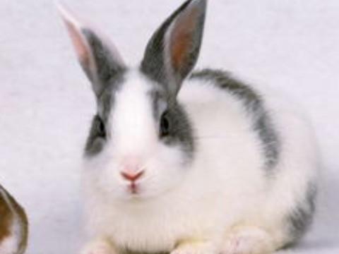 最旺属兔人的5个数字是什么?