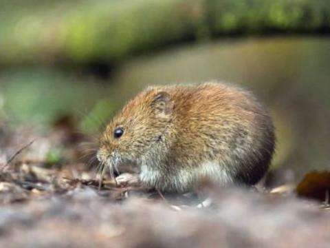 属鼠的幸运色是什么颜色怎么催旺运势?