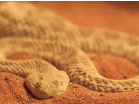 属蛇的和黄金相克吗佩戴什么合适?