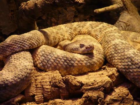 属蛇人一辈子的克星是谁和什么生肖属相相克?
