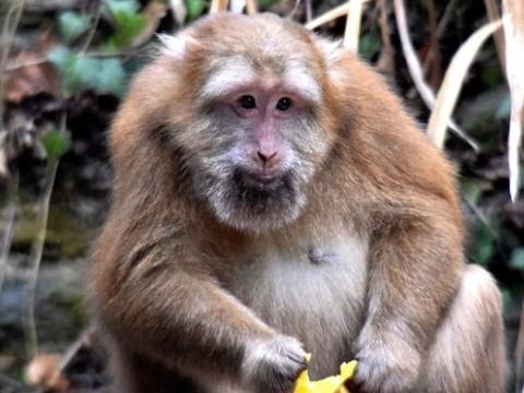 属猴女和属蛇男姻缘相配吗幸福吗?