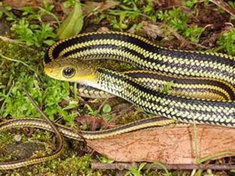 属蛇的是哪一年出生的人命好吗?