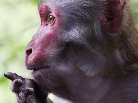 属猴的戴什么翡翠吊坠佩戴翡翠好不好?