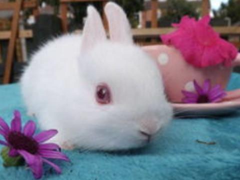 属兔的几月出生最不好命苦呢?