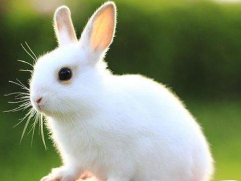 属兔女容易出轨的年龄是多少岁?
