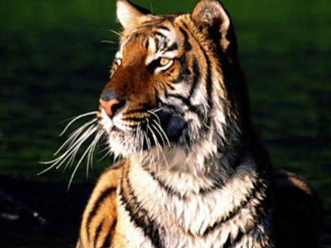 属虎的今年多大了2021年能走大运吗?