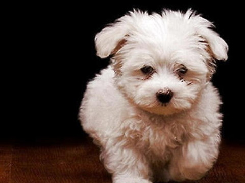 属狗的护身菩萨是哪位运势如何?