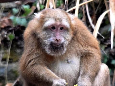 十猴九富有什么说法 属猴人什么时候发财?