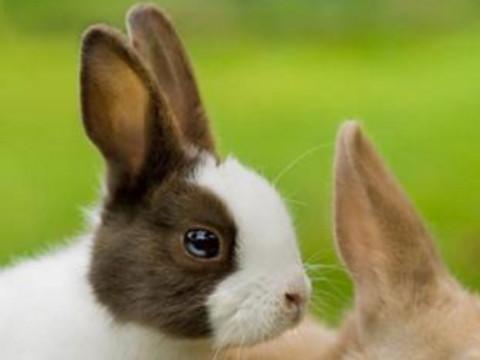 属兔和属猪的相配吗属相相合吗?