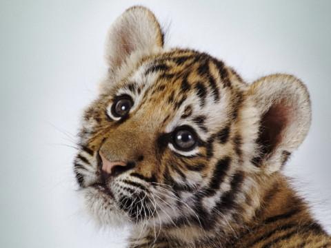 属虎的哪个出生日最差命苦?