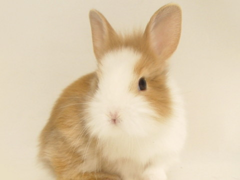87年属兔人十年大运怎么样旺不旺?