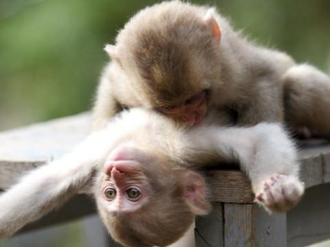属猴的今年几岁对照表2021顺不顺?