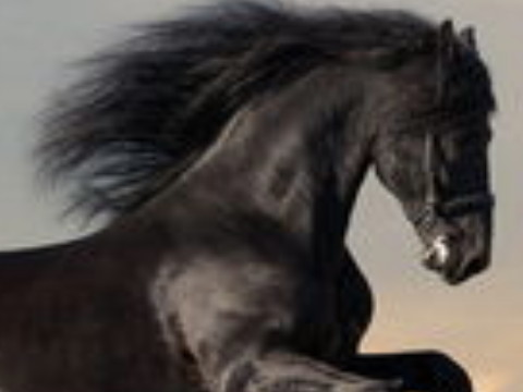2002年属马的适合学什么专业比较合适?