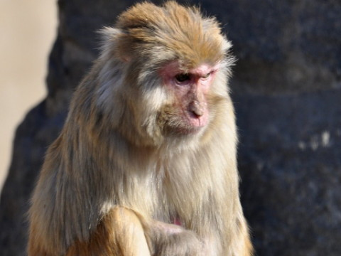 1980年属猴人2022年运势男性,80年42岁属猴男2022年每月运程怎么样