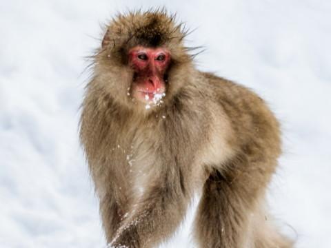 属猴的女人爱什么类型的男人?
