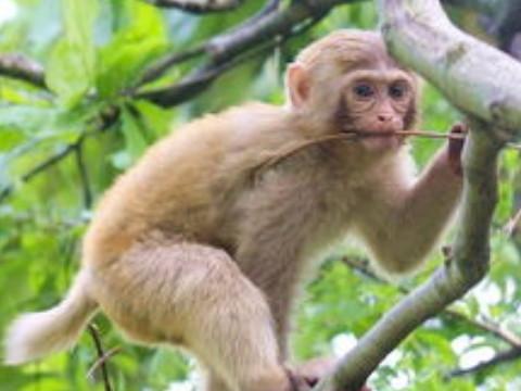 68年猴人下半年运势如何能发财吗?