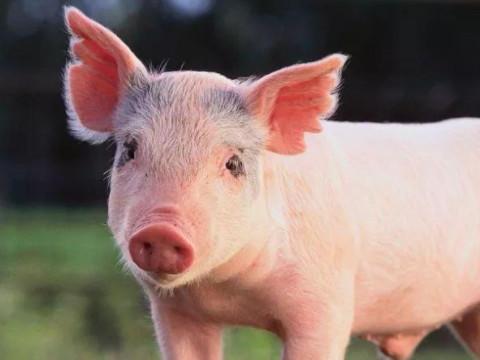95年属猪的三大坎是啥时候怎么化解?