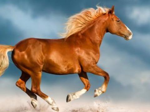 78年的马和什么属相好生肖相合?