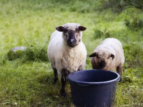 羊年出生的人今年多少岁命好吗?