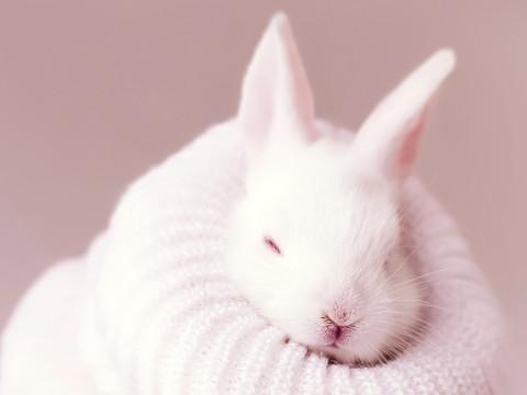 属兔的本命年应该注意什么小心哪些事?